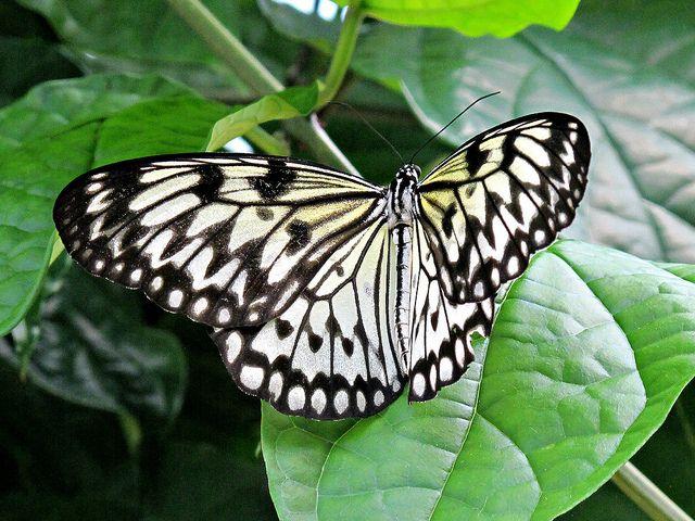 Butterflies Live Lewis Ginter Botanical Gardens
