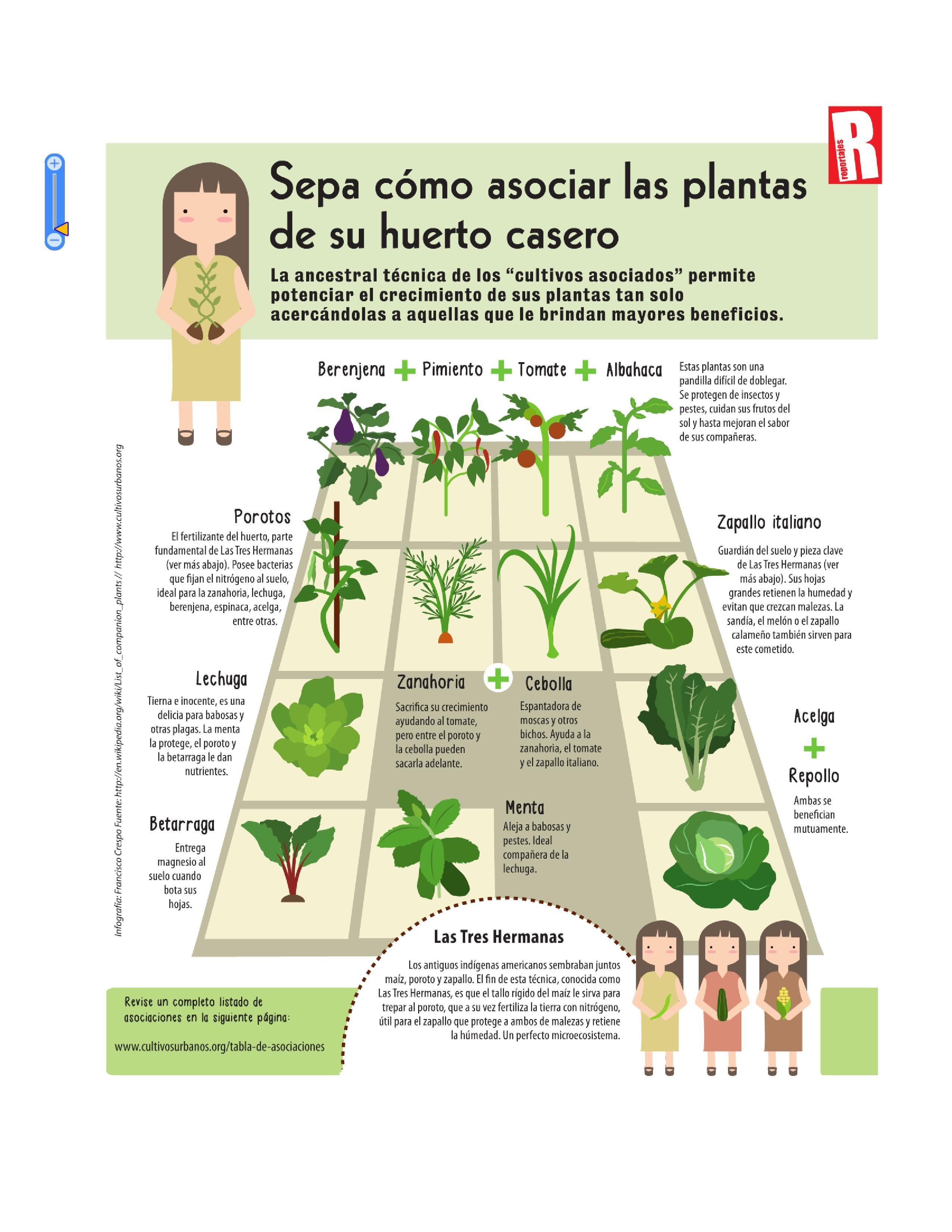 Asociaciones de cultivos huerto en casa pinteres for Asociacion cultivos huerto urbano