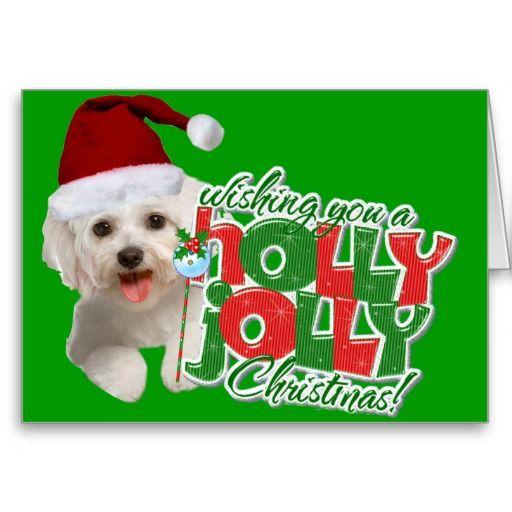 Maltese wishing holly jolly xmas card