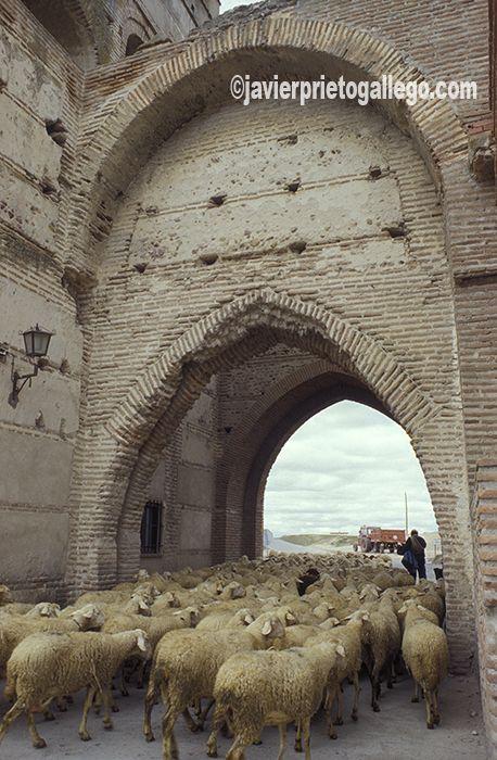 Una de las puertas de la muralla de Madrigal de las Altas Torres. Ávila. Castilla y León. España. © Javier Prieto Gallego. www.siempredepaso.es