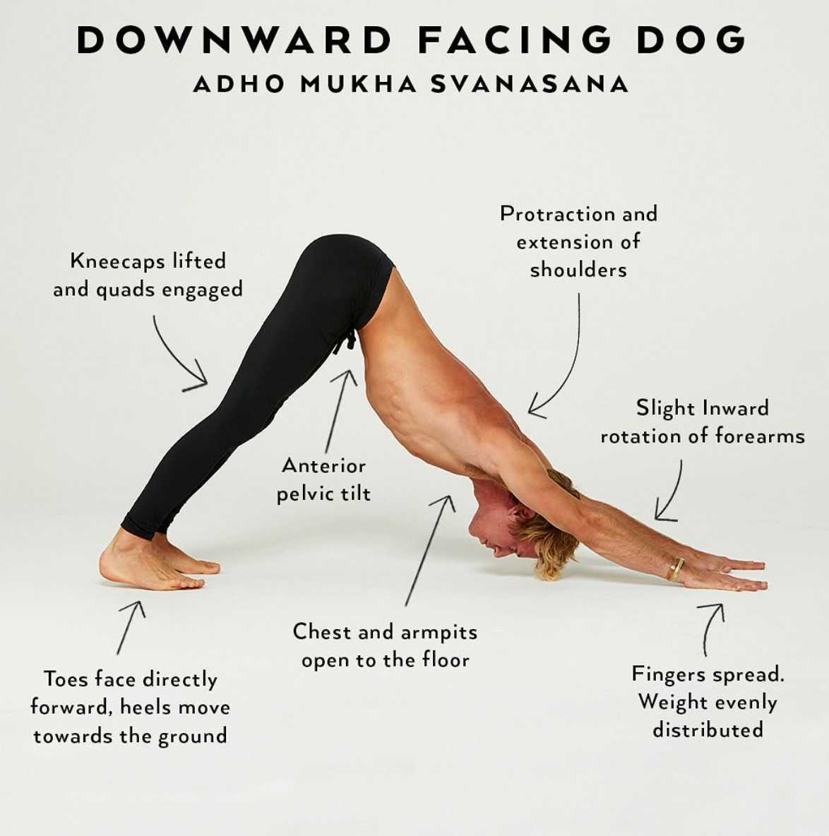 Downward Facing Dog is a pose that is often oversimplified. There ...