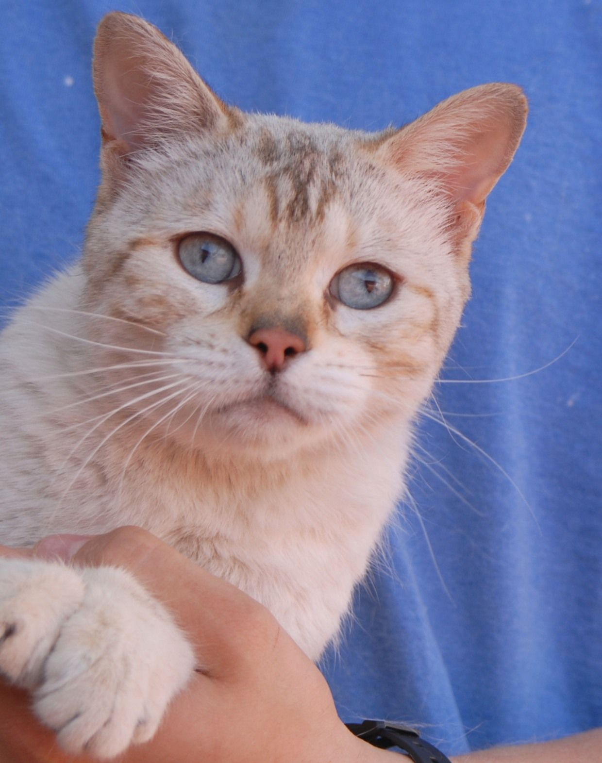 Gertrude Likes Building Ever Stronger Relationships With People Cultivated With Time And Respect Be Patient With Her And Cat Adoption Cute Cats Cute Animals