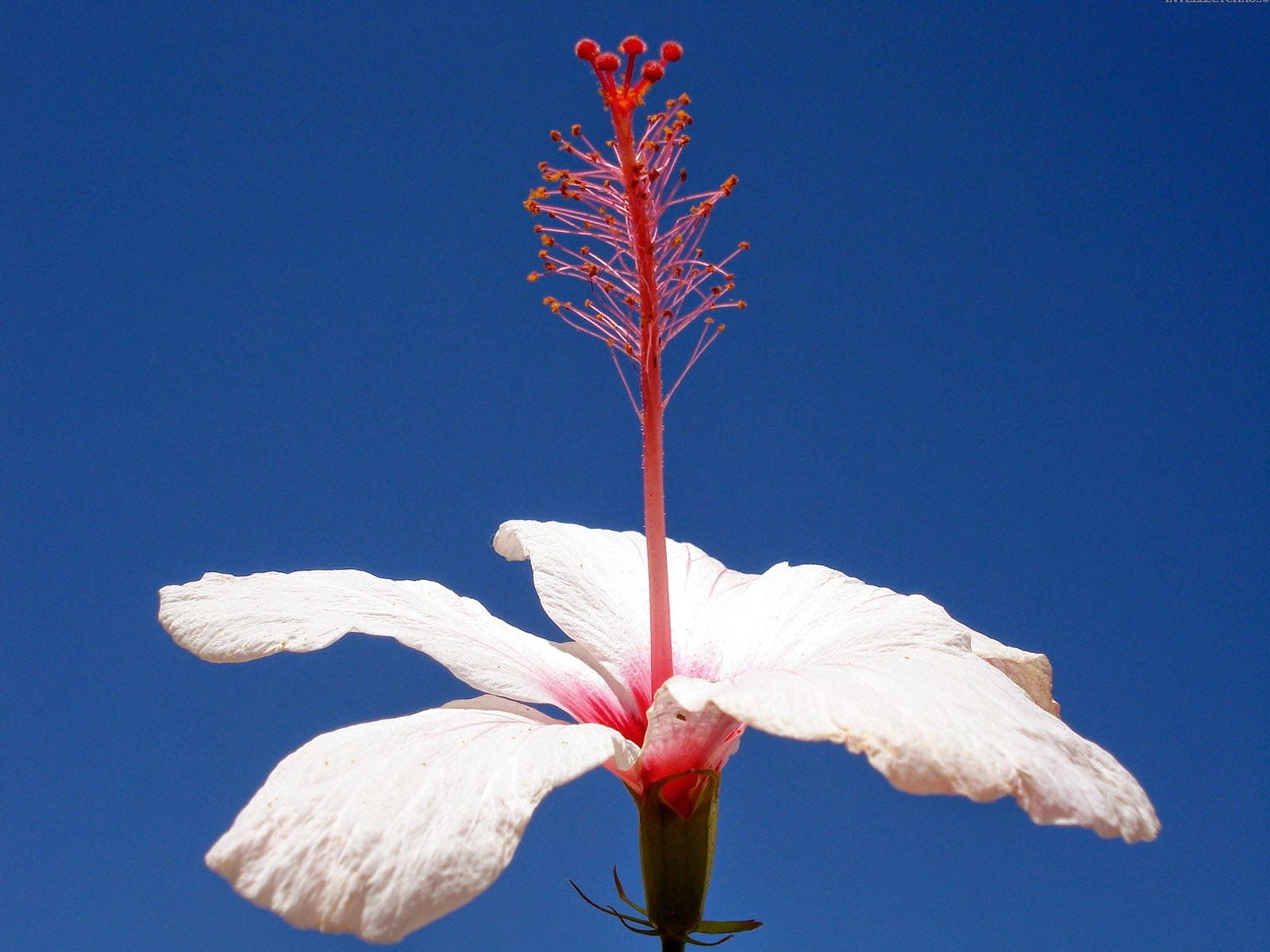 Picture of single white flower hd pictures hd pictures picture of single white flower hd pictures izmirmasajfo