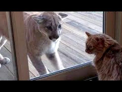 GET READY for ULTRA LAUGHING - Super FUNNY & HILARIOUS ANIMAL videosJust look how all these dogs, puppies, cats, kittens, goats, bears, squirrels,... behave, play, fail, make funny sounds, react to different things,...... #animal #animals #animalsfunny #animalsquotesfunny #cat #catsanddogs #cutefunnyanimals #dogcat #DOGS #dogsfunny #funny #funnyanimals #funnyanimalsmemes #funnyanimalsquotes...