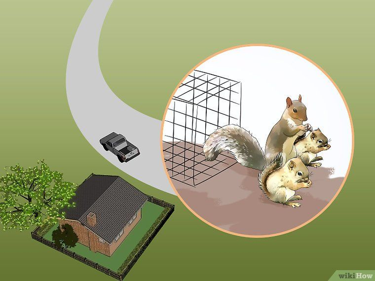3 Ways To Get Rid Of Squirrels In The Attic Get Rid Of Squirrels Squirrel Dead Squirrel