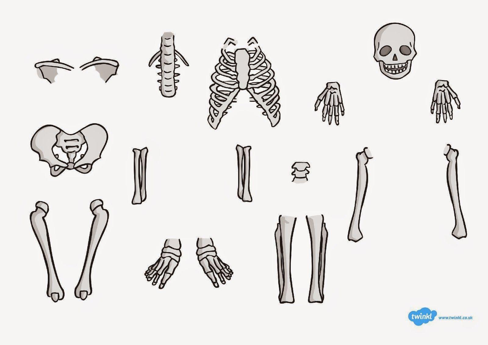 Marci fejlesztő és kreatív oldala: Emberi test lapbookhoz
