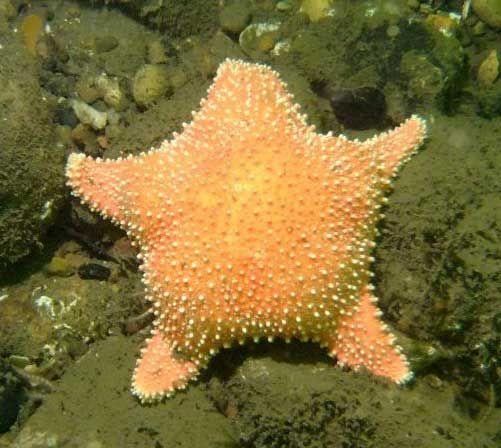Starfish Anatomy Worksheet | Starfish & Related Animals ...