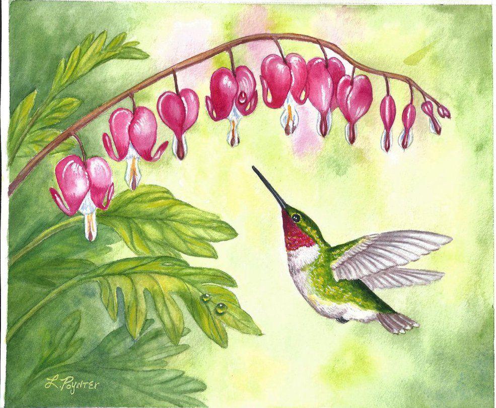 Bleeding Hearts and Rubythroated Hummingbird by