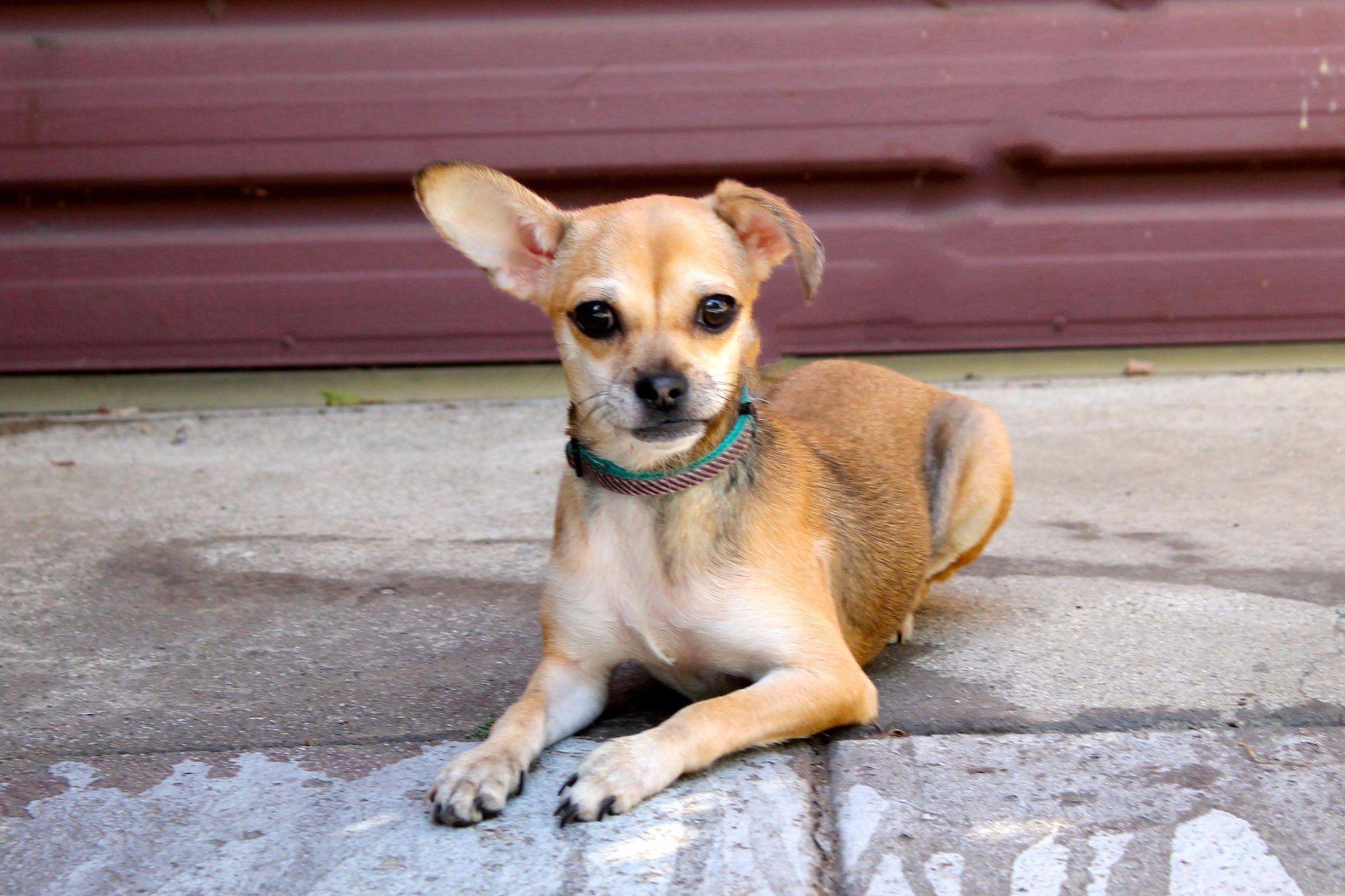 Gayweho Dogs 4 U On Pet Adoption Pugs Dogs