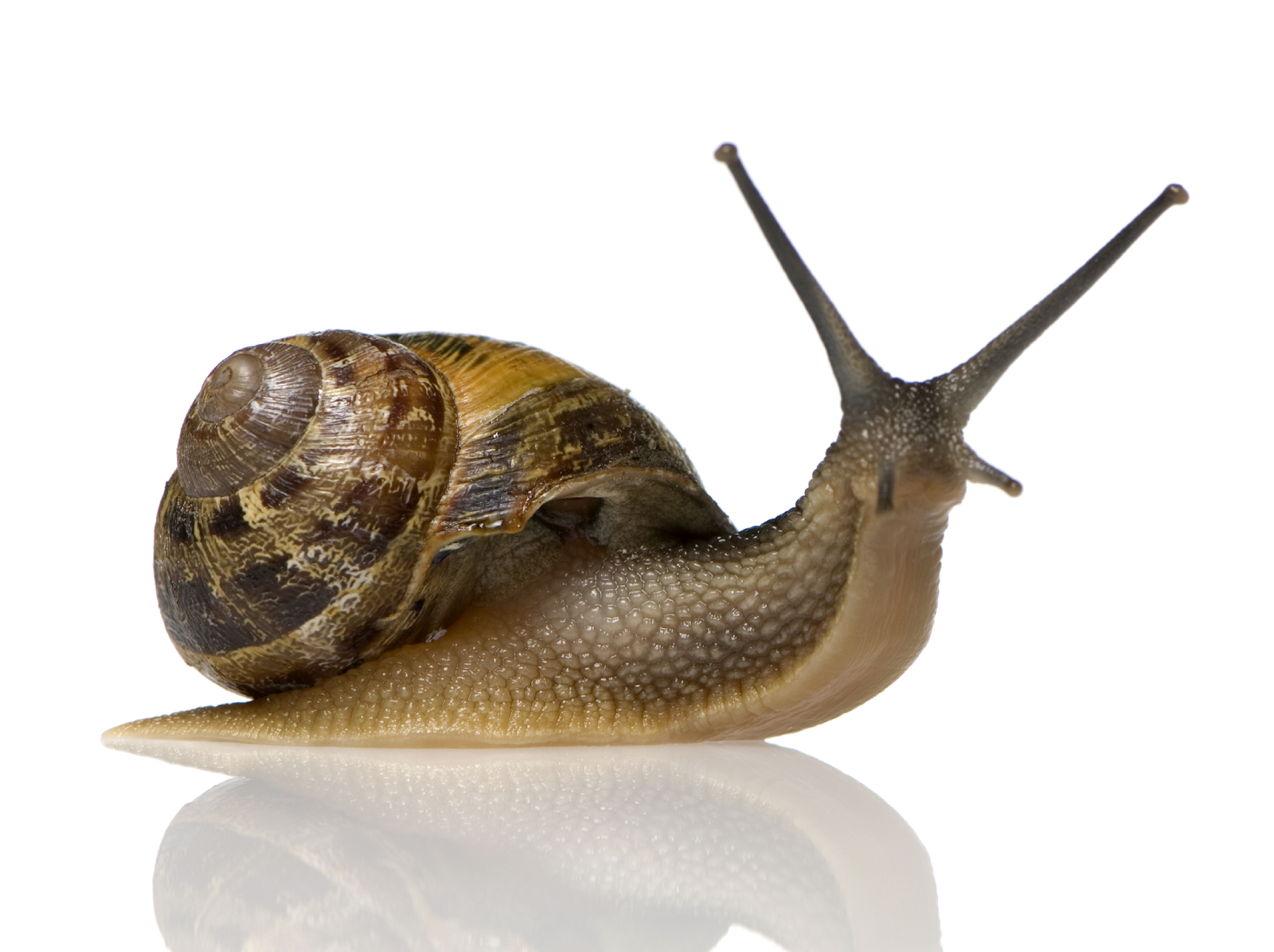 how to eat snails france