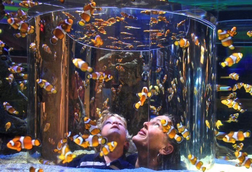 Amazing Aquariums Of Our Planet Underwater Creatures The Golden Scope In 2020 Amazing Aquariums Underwater Creatures Africa