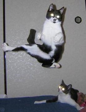X-ray eye cats