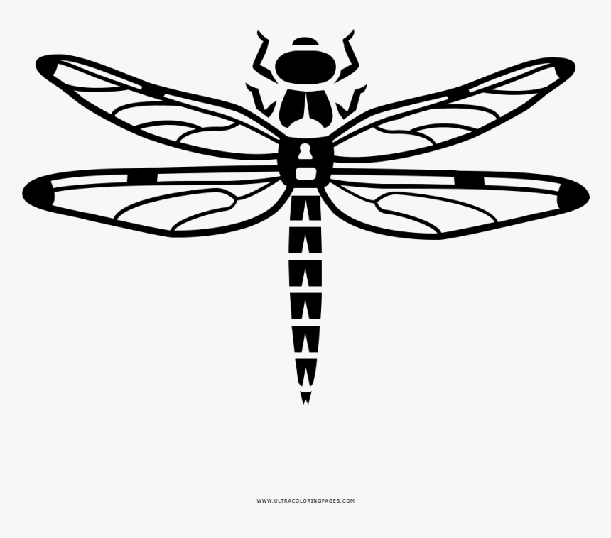 Dragonfly Coloring Page Libelula Para Colorear Hd Png Download Coloring Pictures Coloring Pages Color