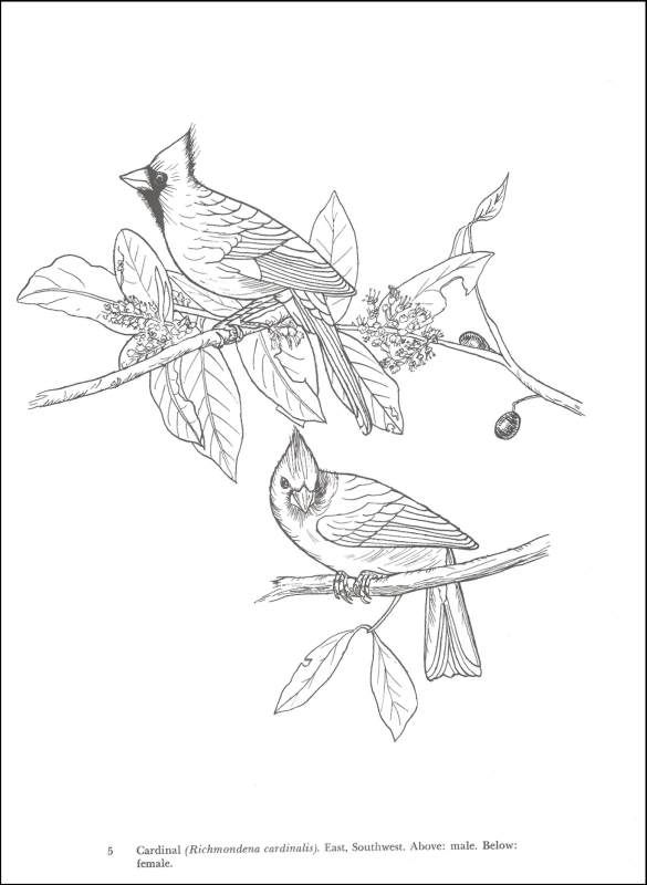 Audubon Birds Of America Coloring Book Additional Photo Inside