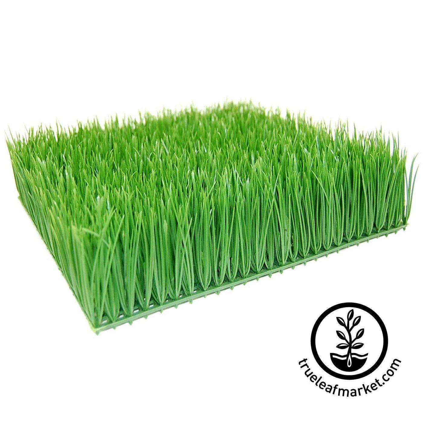 Decorative plastic artificial wheatgrass perfect for ornamental decorative plastic artificial wheatgrass perfect for ornamental useds fake plastic wheatgrass squares can workwithnaturefo