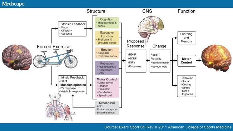 Forced Exercise And Parkinson S Disease Parkinsons Disease Parkinsons Cingulate Cortex