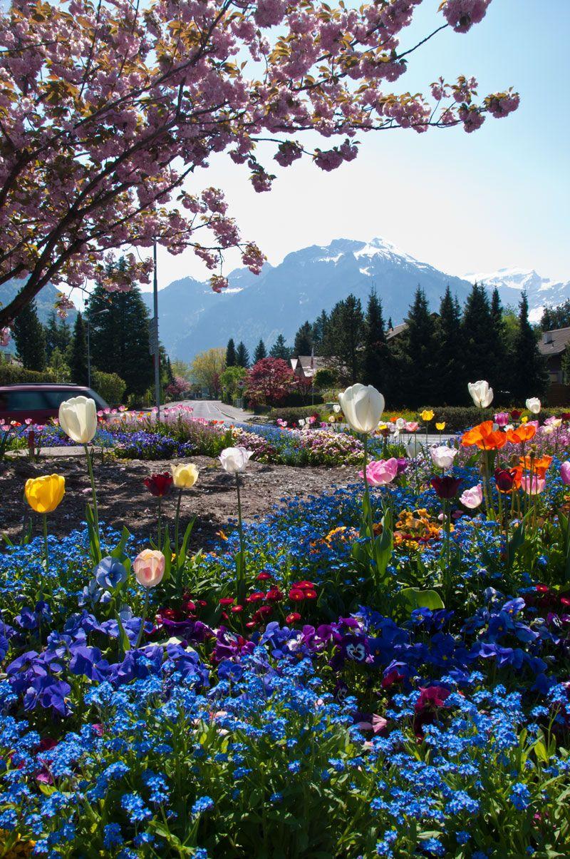 Alpenstrasse Photo Lindas paisagens, Belos jardins e