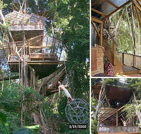 The Biosphere Tree house is situated in a great Indian banyan in the Manoa Valley of Oahu
