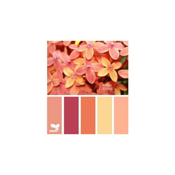 Seeds Colour Schemes ❤ liked on Polyvore featuring design seeds