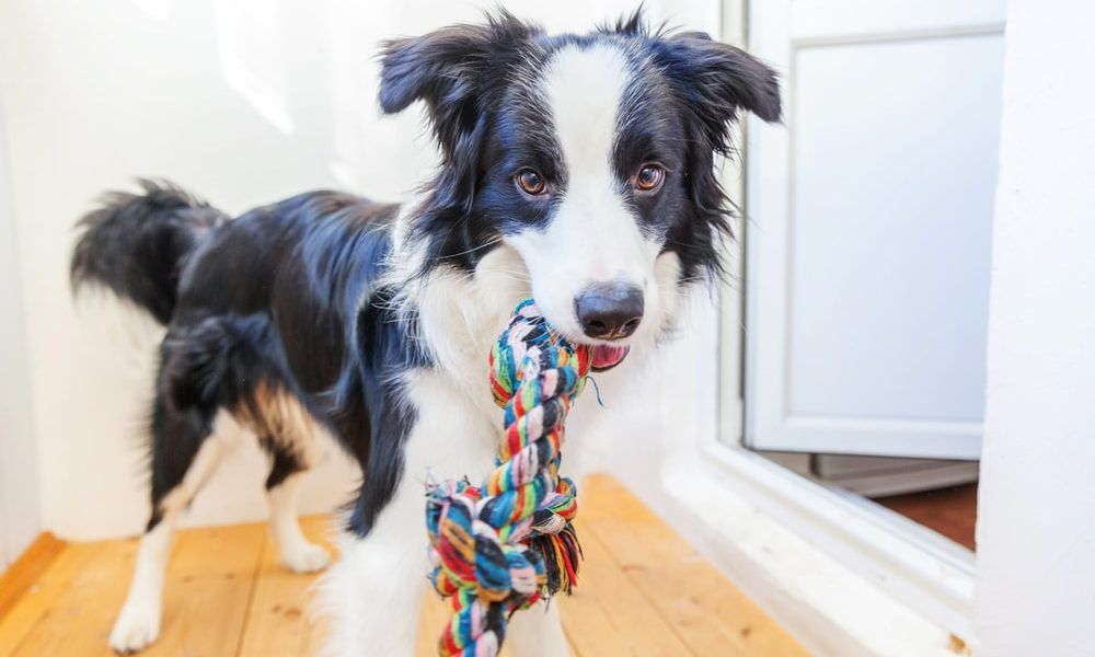 Pin on lifestyles with dogs
