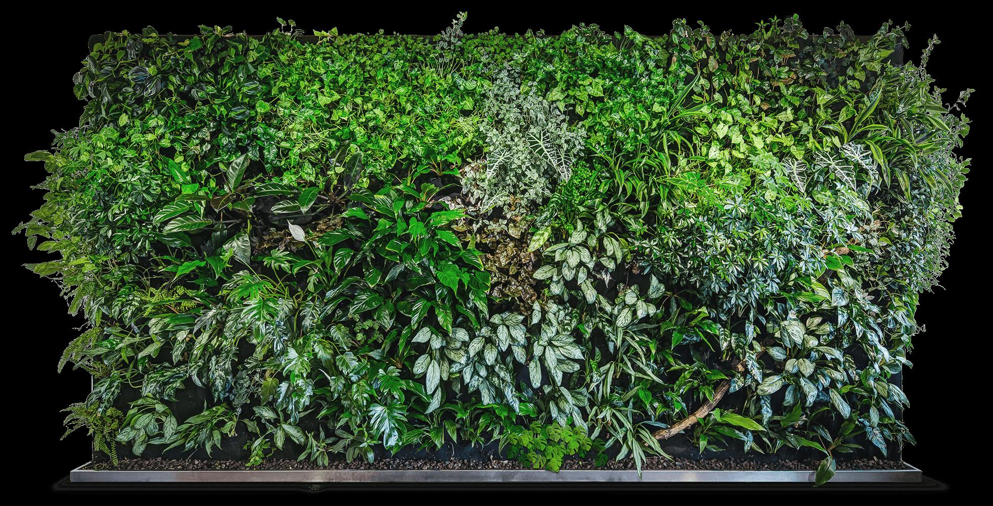 Green Wall Photoshop In 2021 Green Wall Backyard Garden Design Green Wall Design