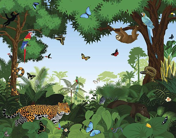Rainforest With Animals Vector Illustration Vector Art