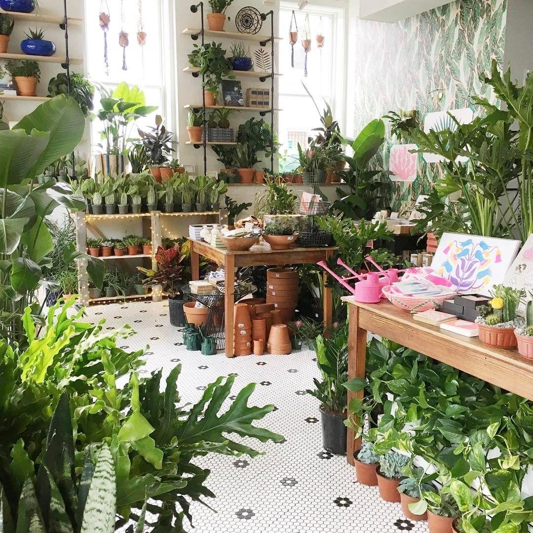 House Plants Decor Garden