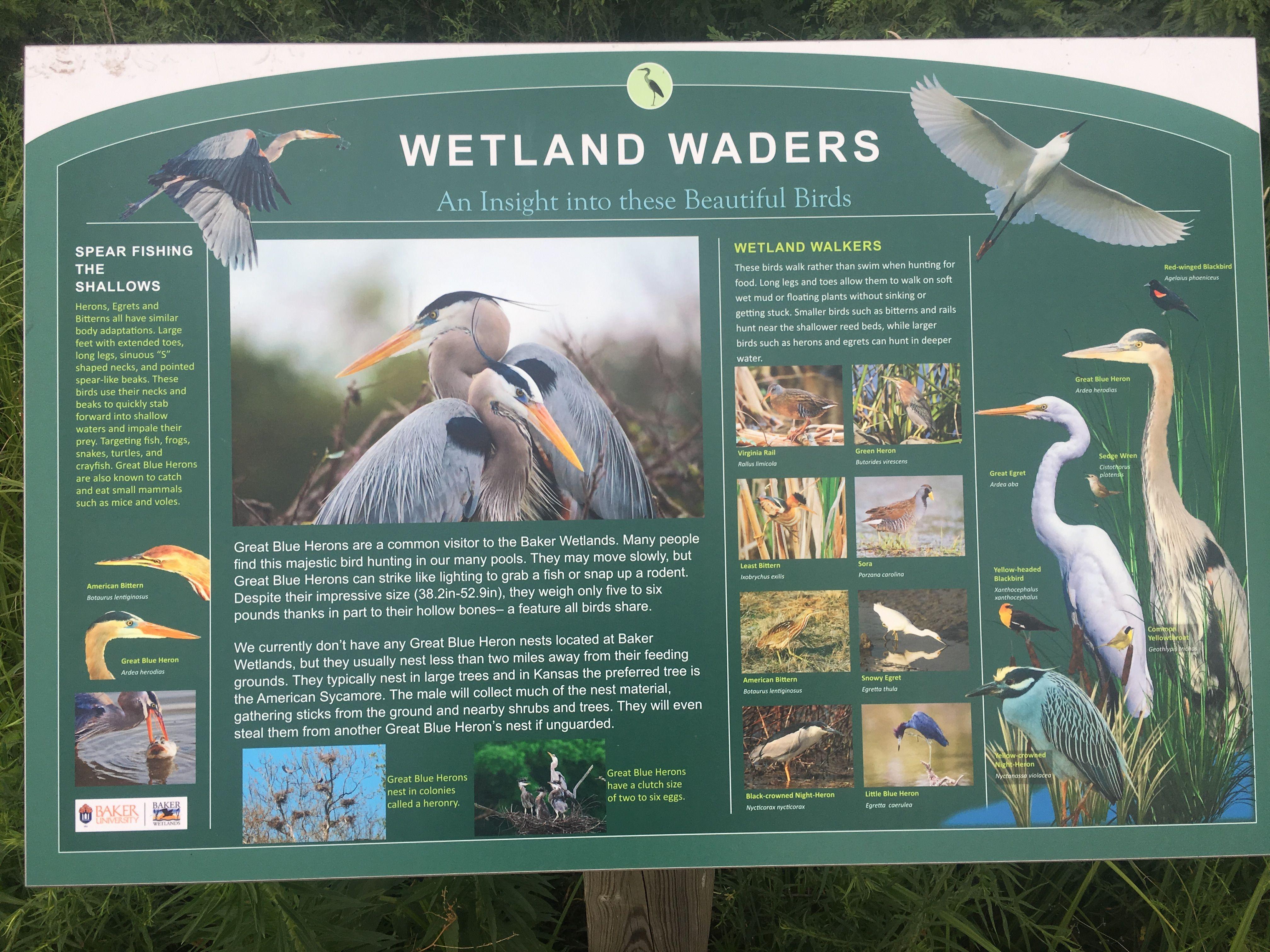 Wetland Waders Wetland, Beautiful birds, All birds