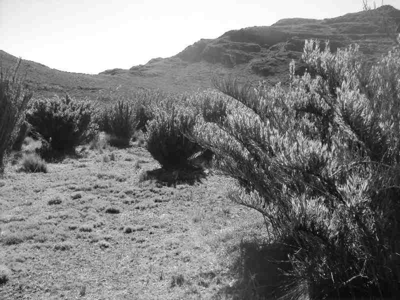 Valle de los Conejos - https://senderosdelchirripo.com/valle-de-los-conejos/