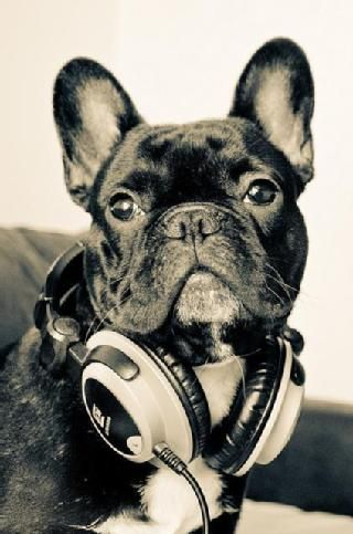 What kind of #music is this #dog listening to with his # ...