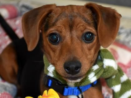 Adopt Me Dogs, Adoption, Humane society