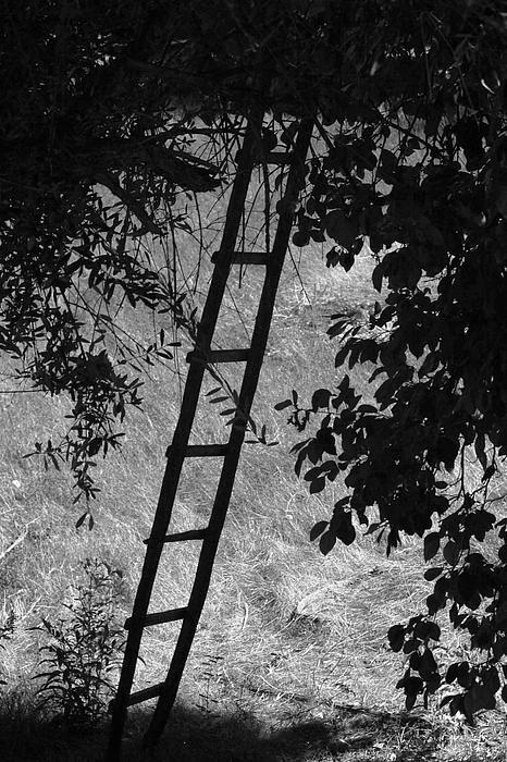 http://fineartamerica.com/featured/not-a-corporate-ladder-kandy-hurley.html?newartwork=true