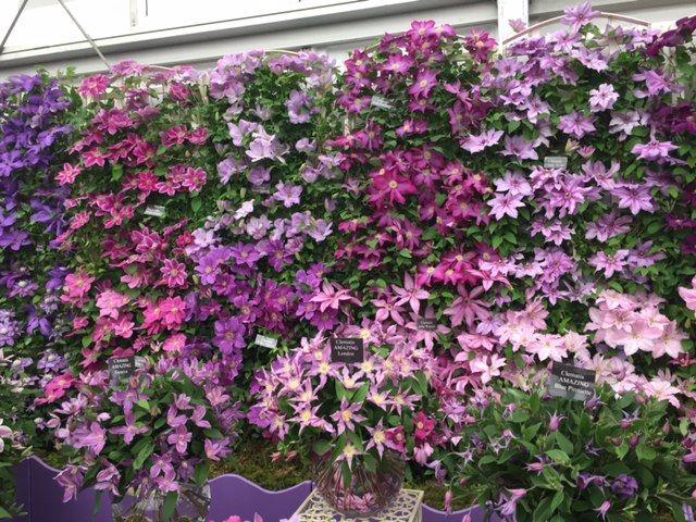 clementis flower walls - Google Search | Clementis ...