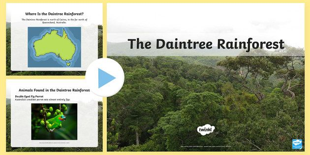 the daintree rainforest powerpoint australian rainforest