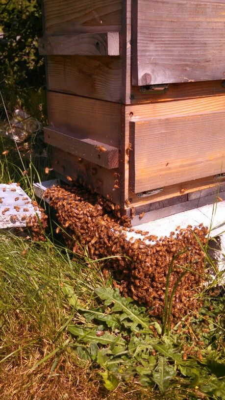 Tasting room #honey #bee #swarm...