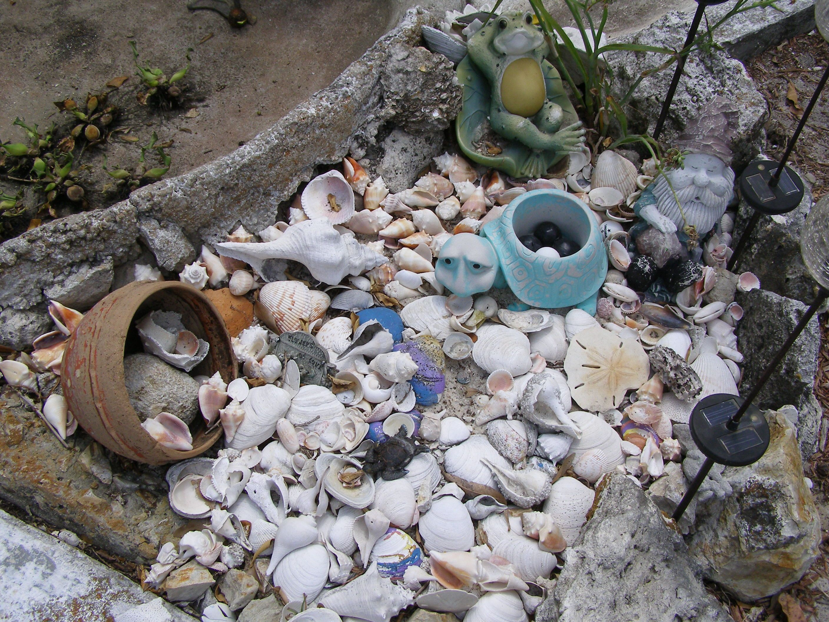 My Shell Garden With Images Landscaping With Rocks