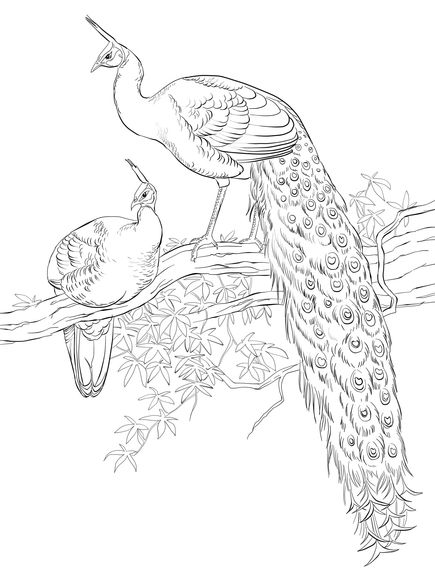 Green Java Peacocks Coloring page | coloring | Pinterest | Repujado ...