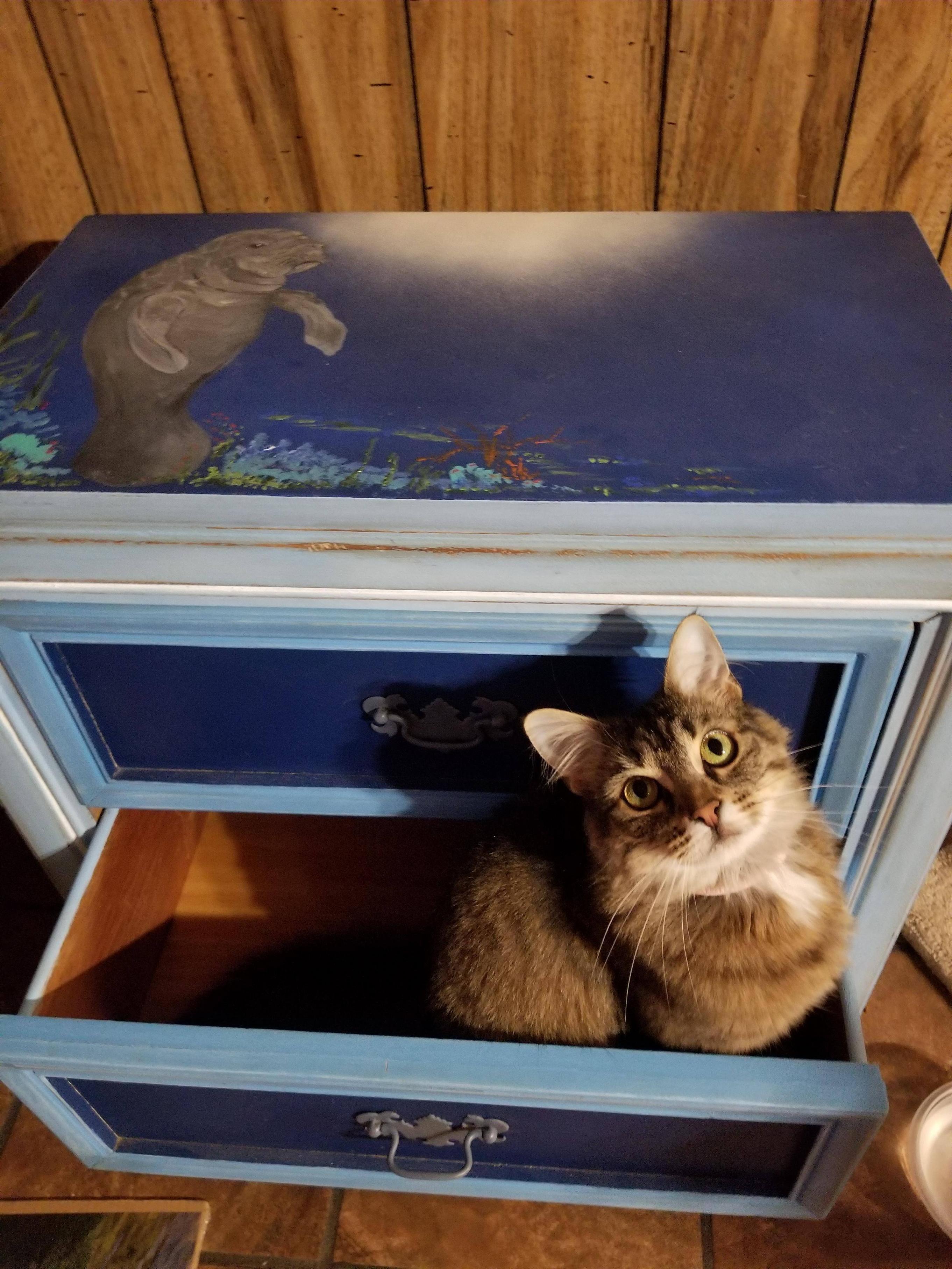 Whopper thinks we got her a new bed! #aww #cute #cutecats #catsofpinterest #cuddle #fluffy #animals #pets #bestfriend #boopthesnoot