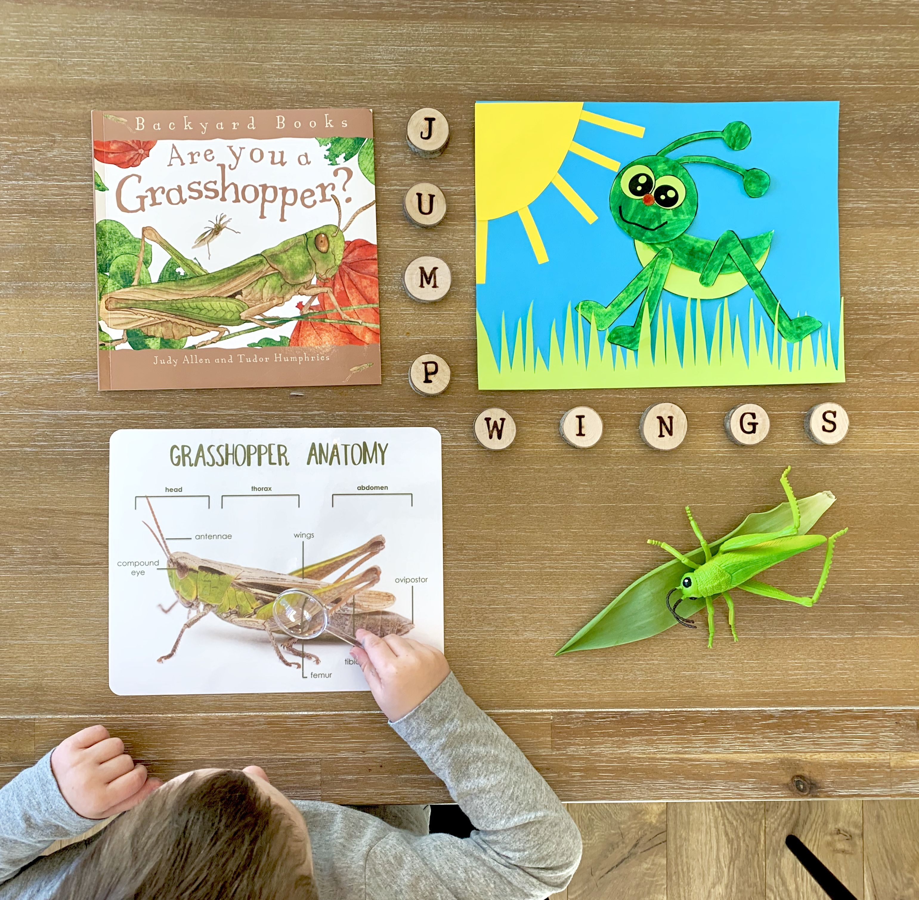 Grasshopperbook Insects Penguincraft Bugcraft