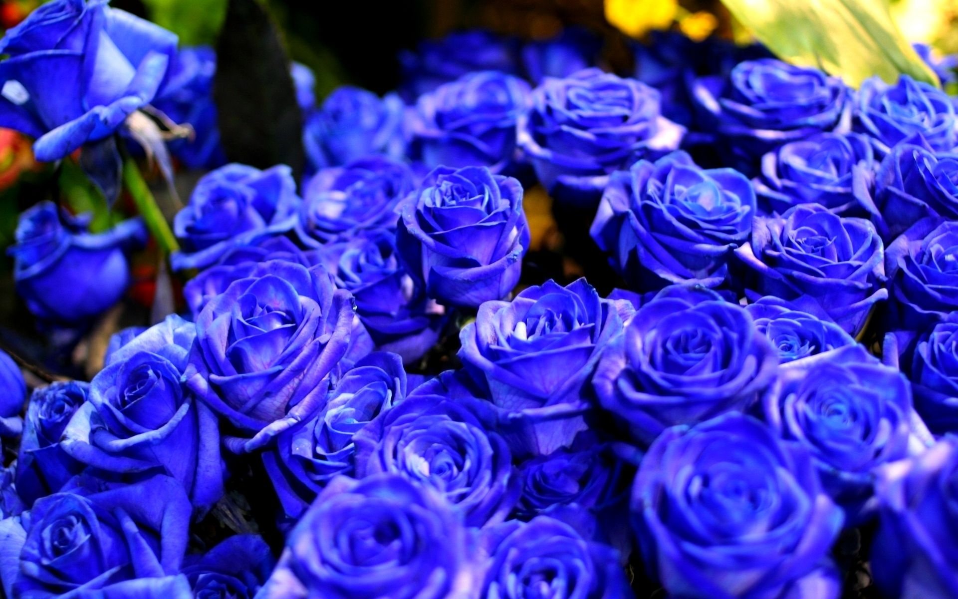 Hd Beautiful Blue Roses Wallpaper Download Free 54873 Blue Roses Wallpaper Blue Roses Blue Rose Bouquet