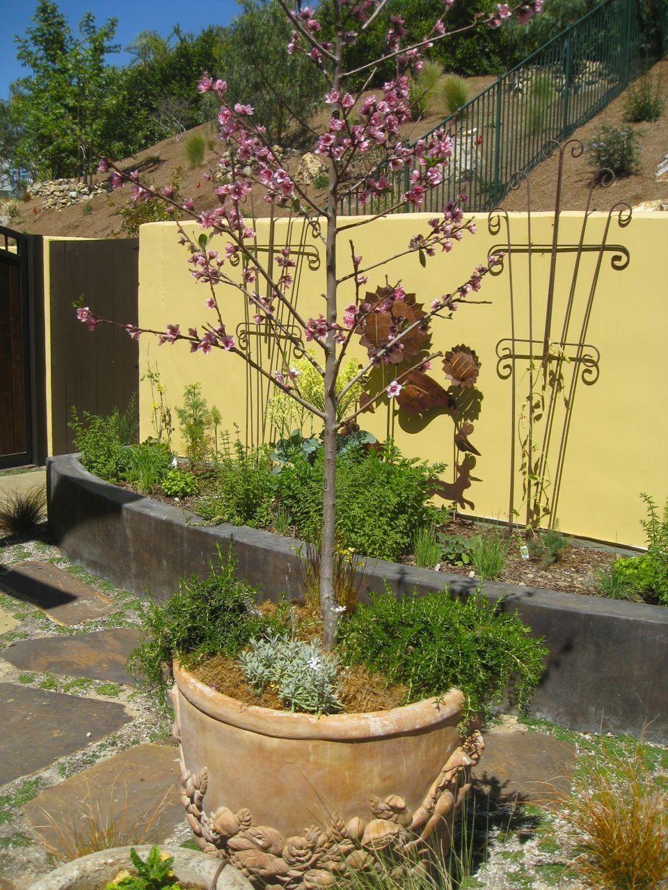 Best Photo Of Fruit Plants In Pots In The Small Backyard