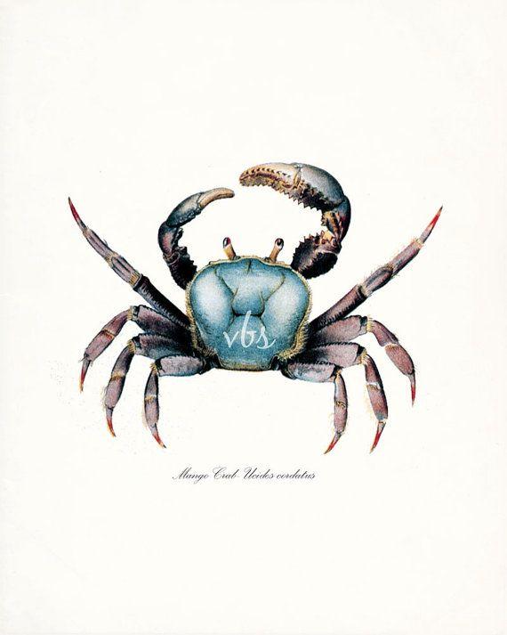 Coastal Decor Blue Mango Crab Natural History by vintagebytheshore ...