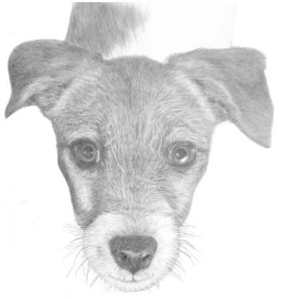 Drawing animals in pencil pdf download review is it reliable