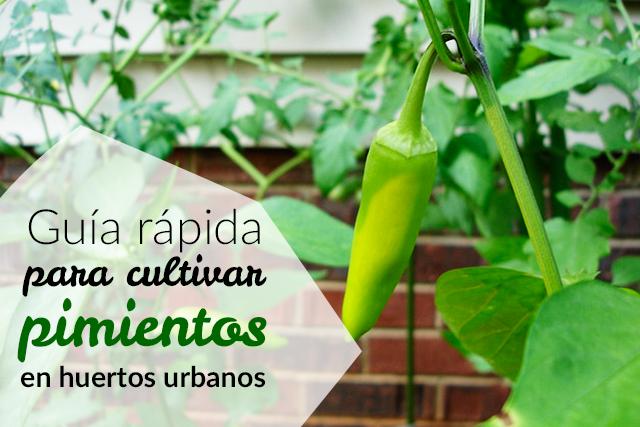 C mo cultivar pimientos en huertos urbanos huerto for Cultivo pimiento huerto urbano