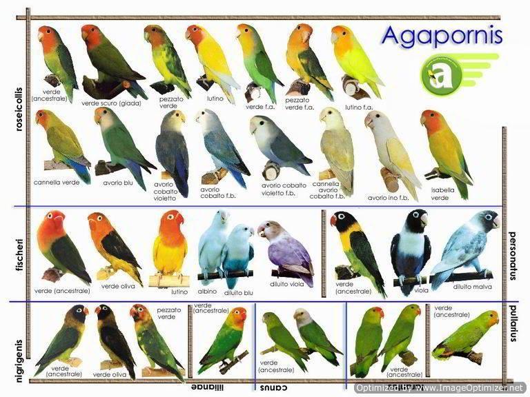 Manuales Y Tutoriales Relacionados   Pájaros - Aves   Pinterest ...