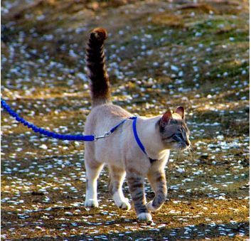 A Harness And A Bungee Leash Allow Your Cat The Joy And Freedom Of Exploring The Outdoors Without Straining Their Neck Gentle Leader Cat Leash Corgi