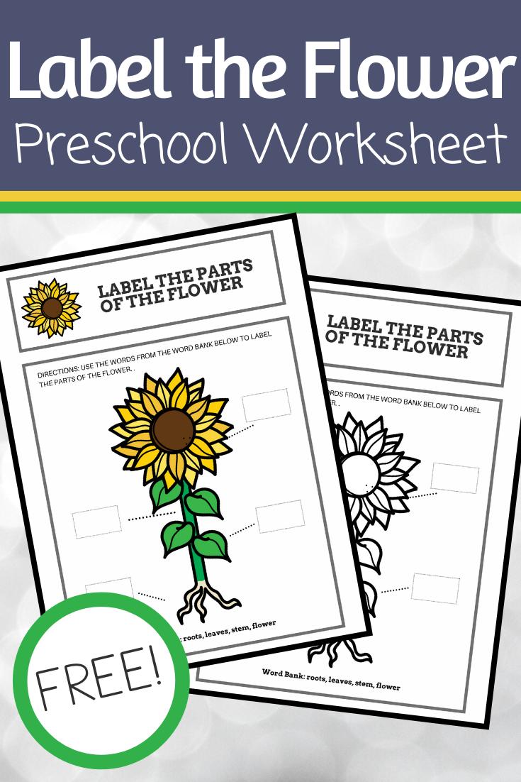 Parts Of A Flower Preschool Worksheet Parts Of A Flower Preschool Worksheets Flower Activities For Kids [ 1102 x 735 Pixel ]