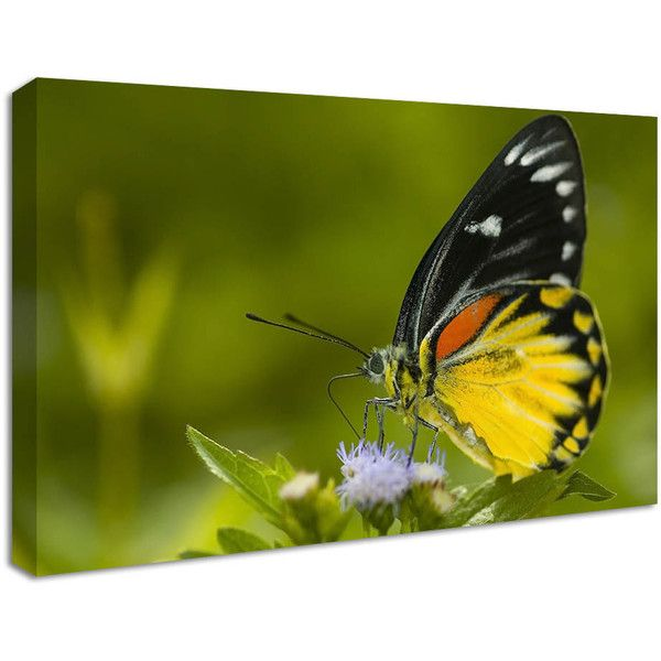 NuCasa Beautiful Butterfly Canvas Print (£30) ❤ liked on Polyvore featuring home, home decor, wall art, modern wall art, butterfly home decor, butterfly wall art, modern home accessories and modern home decor