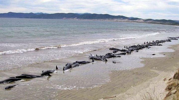Wale In Neuseeland