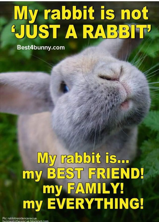Like mine sweety | Kaninchen | Kanin, Kaniner und Legetøj